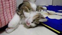 2只小猫咪