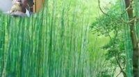 葫芦丝独奏:《竹林深处》演奏:于达奇