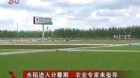 水稻进入分蘖期农业专家来指导 120620 黑龙江新闻联播