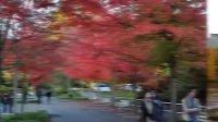 美丽的加拿大秋色风光
