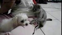史上最欠扁的猫,太逗了!