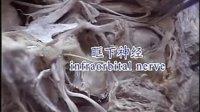 《卫生部医学视听教材》——系统解剖学—神经系统解剖(脑神经)