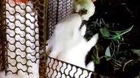 我家的大白兔最爱吃包子啦!