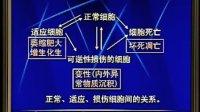 中国医科大学病理学01