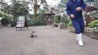 【发现最热视频】激萌!超级黏人的企鹅君