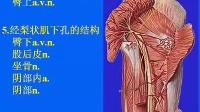 [中山大学][人体解剖学][36课]14