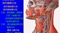 [中山大学][人体解剖学][36课]18