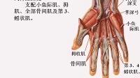 [中山大学][人体解剖学][36课]16