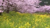 放松的风景 桜