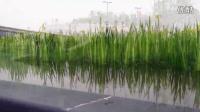 浐灞国家湿地公园 气势磅礴音乐风景欣赏 韩战影音