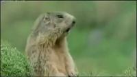 爆笑配音《动物世界》 老版的动物世界弱爆了-320x240