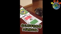 足球宝贝之预测巴西世界杯的小动物们《岛说鸟事》第一期