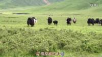 4浪漫的草原