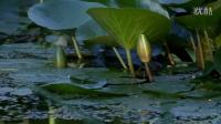雨 池塘 荷
