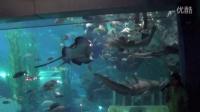 (海底世界)潜水员和鲨鱼明星表演