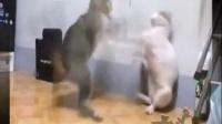 【木头人】:带你领略猫星人独创神功 行如风 战如闪电!