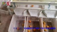 泰信轨道式选果机-橘类筛选样机演示视频