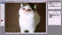 PS照片处理技巧教程 03 去除猫咪的红眼