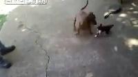 狗狗欺负小猫打架,被猫妈妈过来秒杀