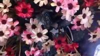 花花世界 标清