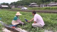 日本鬼子的西瓜长成这样,转基因西瓜