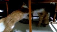 《猫片》德玛西亚打架日常