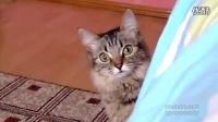 猫咪你看到了神马_标清