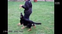国外美女训犬6个月的狗狗