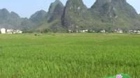 上林县原生态音乐诗画专辑《上林似锦》之《盼》
