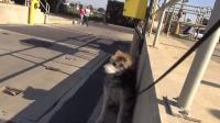 在水处理厂救了一只年迈的流浪狗Mufasa