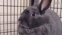 关爱动物:会唱歌的兔兔的鼻子