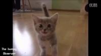 关爱动物:超萌的动物baby,心彻底化了