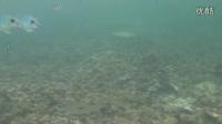 毛里求斯浮潜