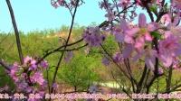 梅州樱花谷爱丽丝庄园