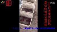 泰信牌轨道式选果机-百香果(巴西果)试验机