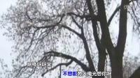 王二妮--桃花红 [MV音乐片]_.mp4
