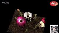光场相机镜头下的flower-凌云光技术