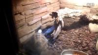 北京动物园缅甸陆龟环境随拍