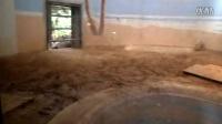 北京动物园亚达陆龟环境随拍