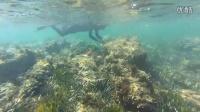 SKEMA商学院本科项目 酷毙了!在尼斯海湾潜水也是偶们学习的一部分