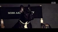 #我的COACH与萌狗#Miss Asia Kinney
