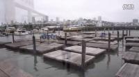 【Lina Vlog】Travel vlog part 1 (San Francisco)/旅行记-旧金山