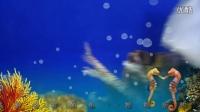 观赏鱼视频-观赏鱼实拍-海底世界视频-水族馆观赏鱼视频