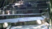 CLIP0018太湖疗养院竹林