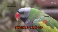 【萌笑来了】鹦鹉变身环卫工人捡垃圾