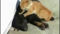 狗狗死了小猫很伤心