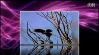 鸟的世界--------皖俞拍