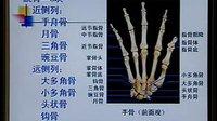中国医科大学 系统解剖学 04讲