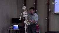 张宗恒脊柱的功能分区1