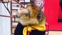 「上下」巴黎店猴年活动